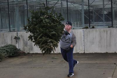 Jimmy Fisher throws a Christmas tree