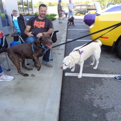 Car show to benefit Humane Society of Richland County on Sept. 22