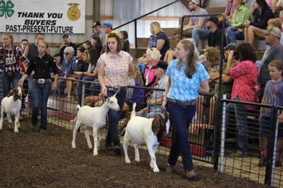 Goats at the Fair.jpg