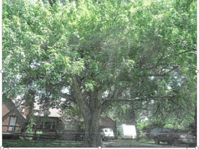 Mansfield Shade Tree Commission announces Heritage Tree program winners