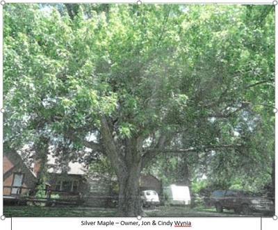 Wynia Tree