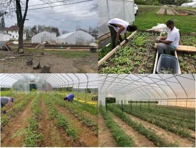 Urban Farm project