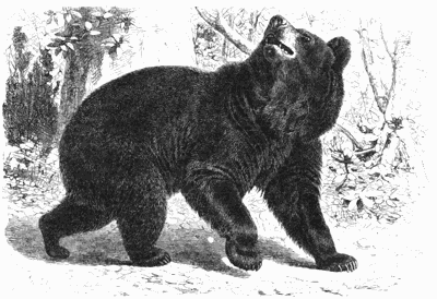 Mohican pioneer had 2 memorable encounters with black bears