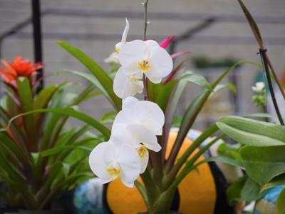 GALLERY: Spring at Kingwood Center Gardens