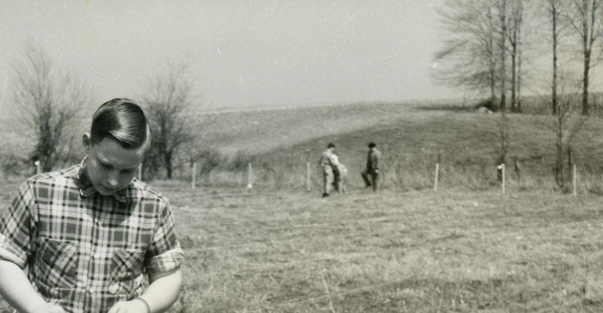 Planting pines in 1954