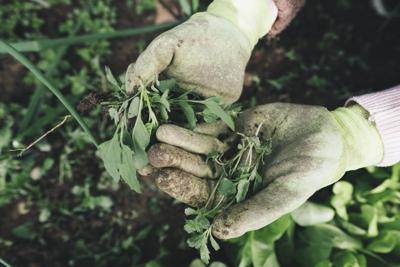 Staying home not an option for garden and landscape workers