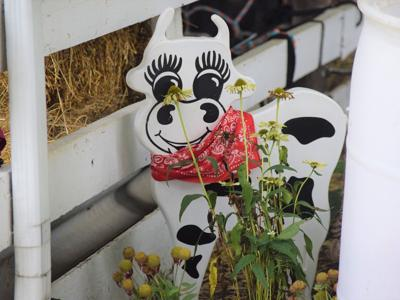 GALLERY: Scenes from the 2020 Crawford County Fair
