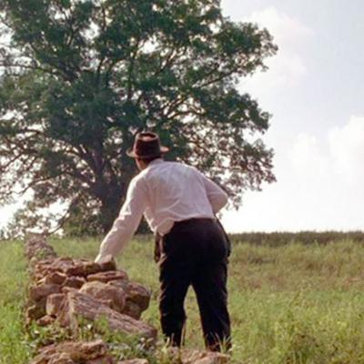 The Shawshank Oak Tree, Ltd., offers fans their own piece of Shawshank