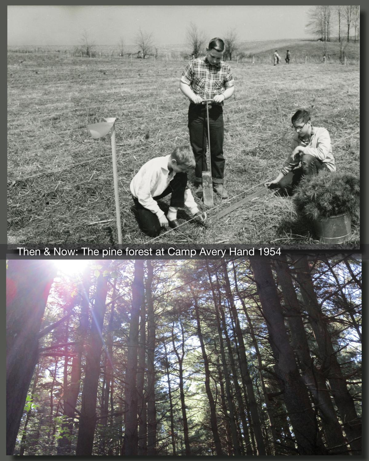 Then & Now: Boy Scouts planting pine seedlings 1954