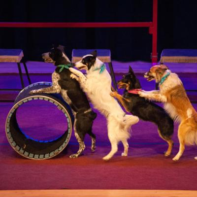 Mutts Gone Nuts set for Jan. 19 at The Renaissance Theatre