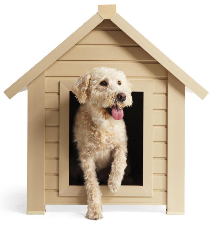 Ask Martha: Dog-proof Your Backyard