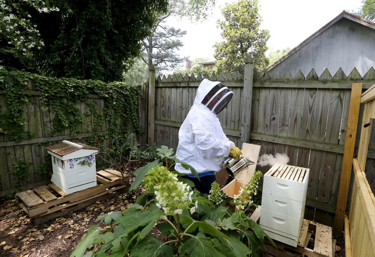 urban beekeeping can be a sweet hobby life richmond com