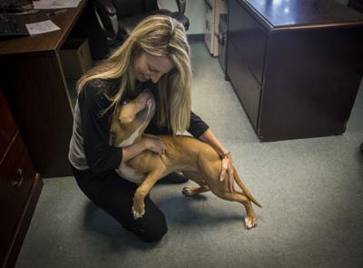 Paws and effect: New life at Richmond's animal shelter