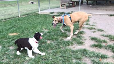 Couple pushes forward on dog park project for Powhatan