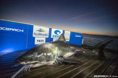 US-NEWS-ENV-SHARK-EASTCOAST-MCT