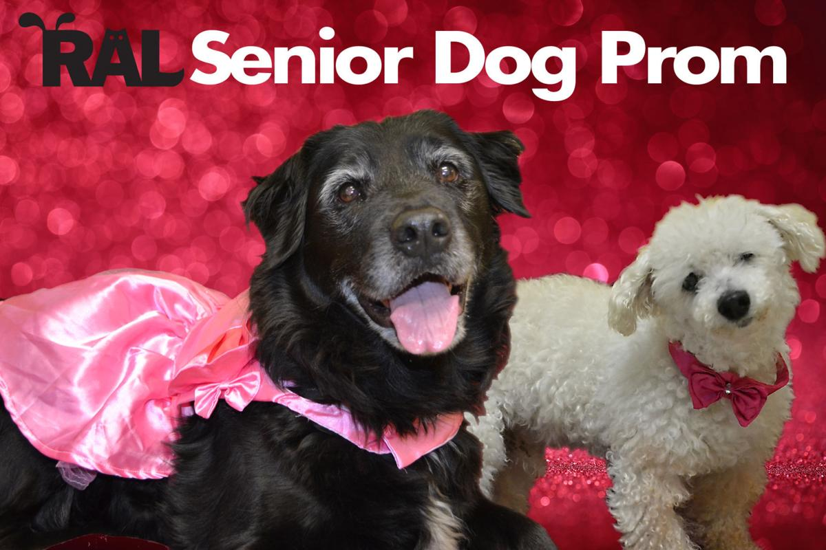 Elderly Richmond dogs are finalists in Senior Dog Prom - who