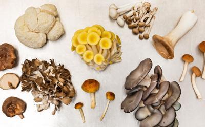 Issue no. 4: Urban mushroom farming outside of Minneapolis, Minnesota