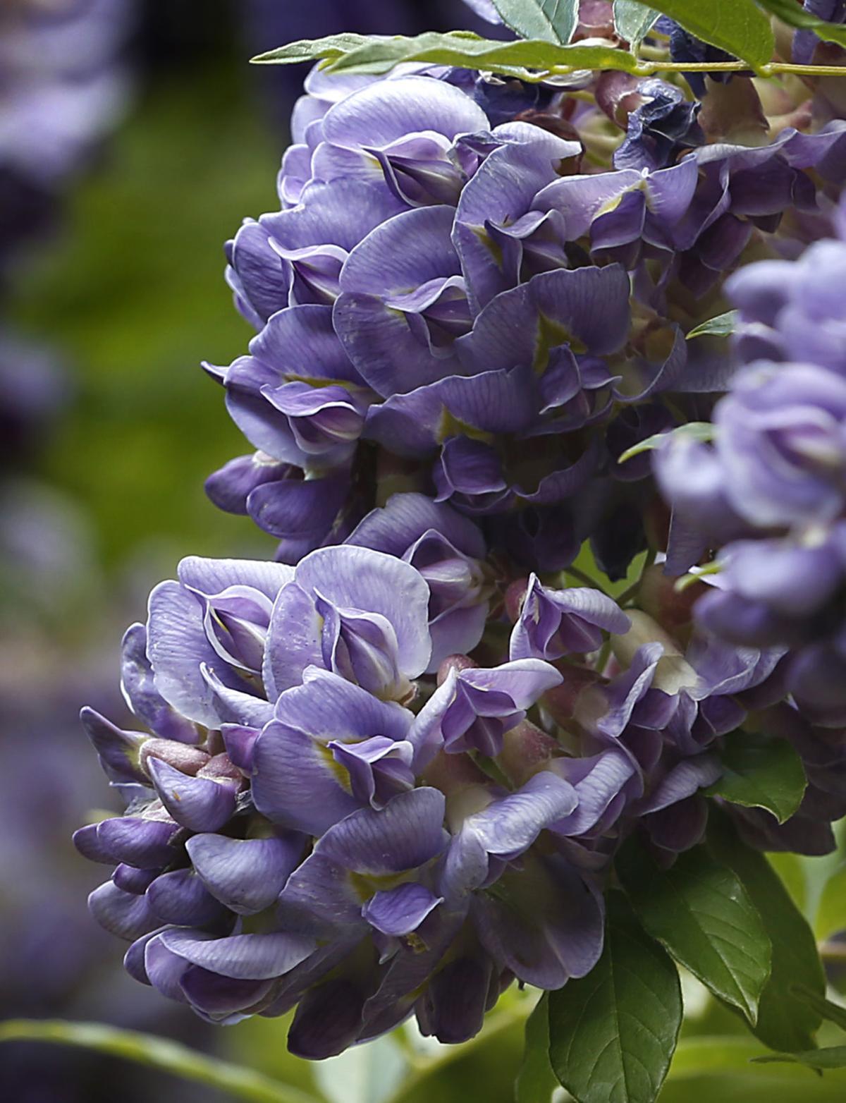 20200510_MET_FLOWERS_AWE01