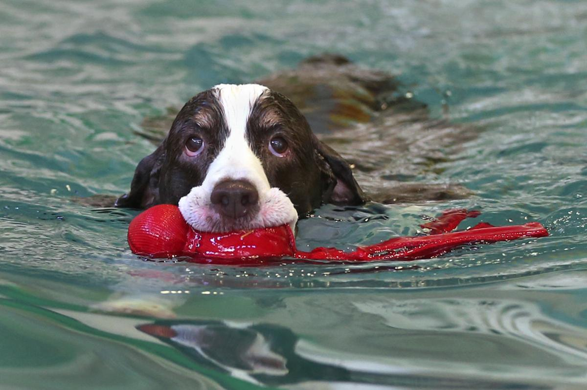 A place where doggies paddle life richmond 20150127lifdogskm1 solutioingenieria Image collections