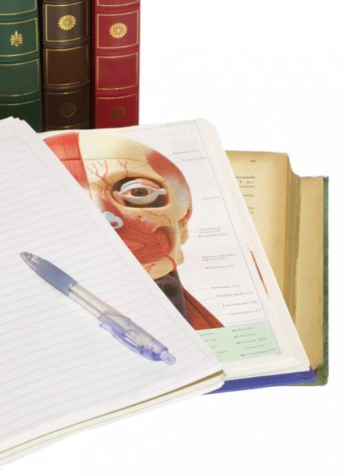 Best Essay   Best Essays writing help
