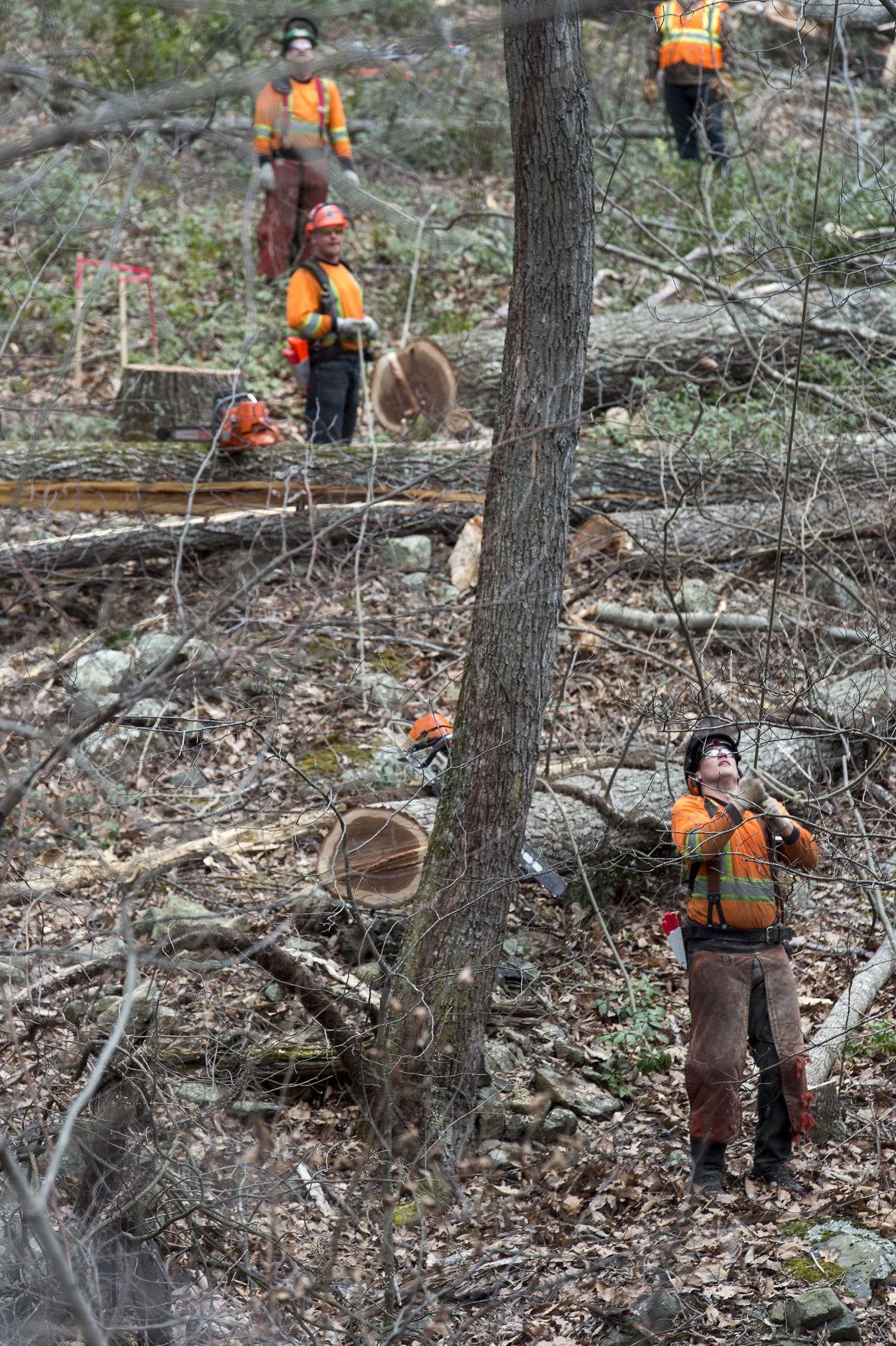 LNA 03072018 ACP Cutting Trees 03.JPG