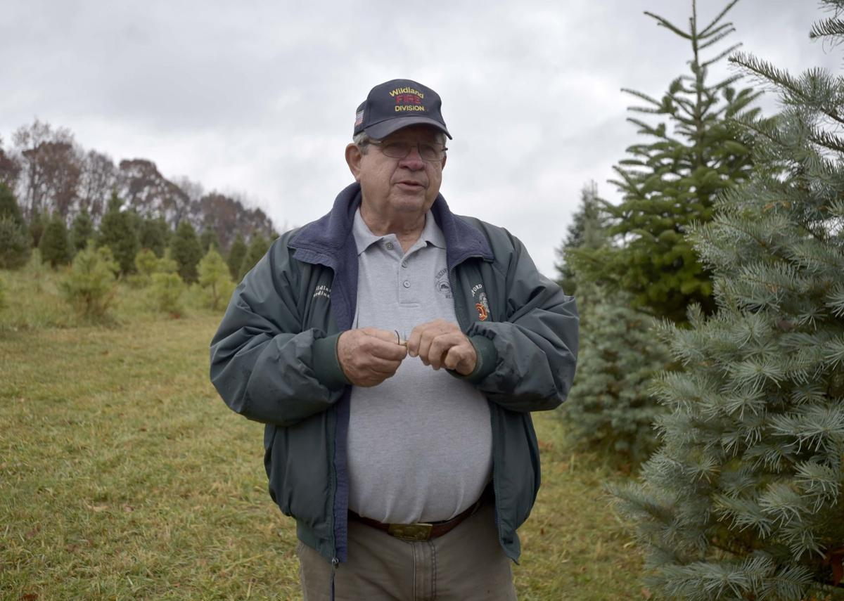Tree Safety 09