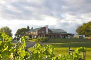 Welcome to Barren Ridge Vineyards!