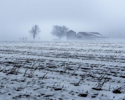 FO - Frosty Farm - Newman (2).jpg