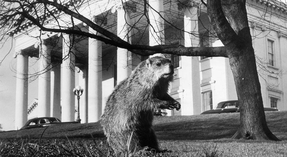 Mr. Marmota Monax
