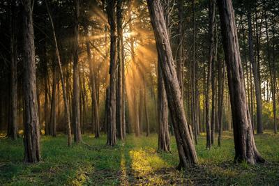 WINNER - TR - Light in the Woods - Ernst (high res).jpg