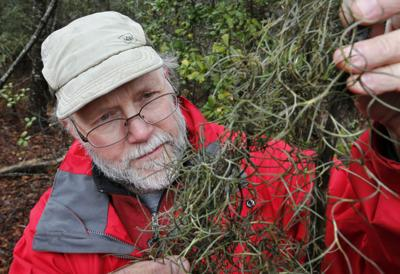 Virginia scientists search for northernmost realm of Spanish moss