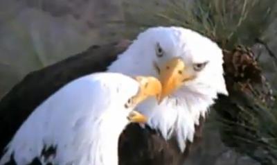 Richmond eagles: Virginia and James