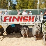 State Fair Racing Pigs