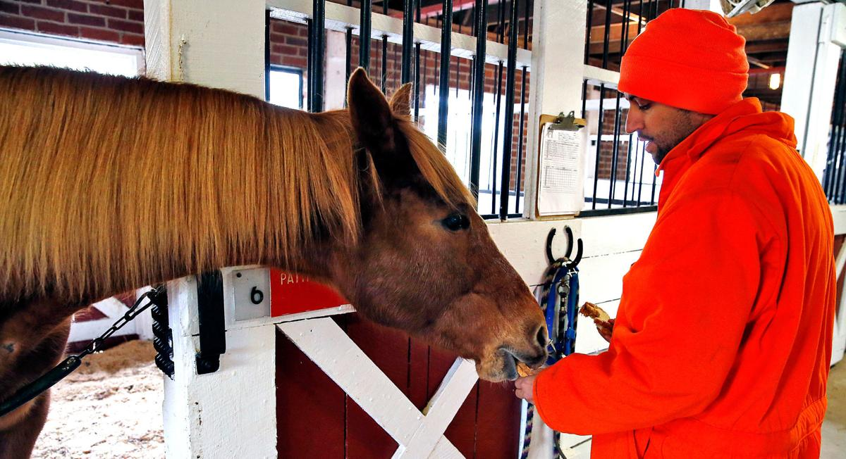 20190224_MET_HORSES_25