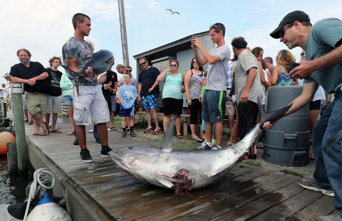 Outer Banks Fishermen Blame Attacks On Overpopulation Of Sharks Richmond Latest News Richmond Com
