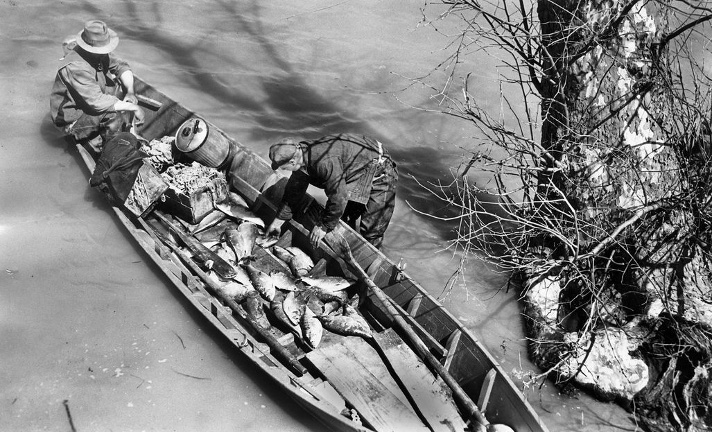 Pamunkey tribe: Canoe returns to reseravation, 1941