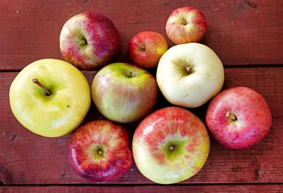 Issue No. 31: Apples and hard cider in Iowa City