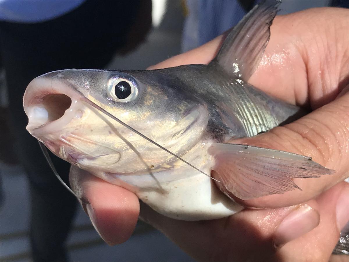 James River fish