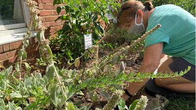 Demonstration garden keeps  feeding people in Powhatan