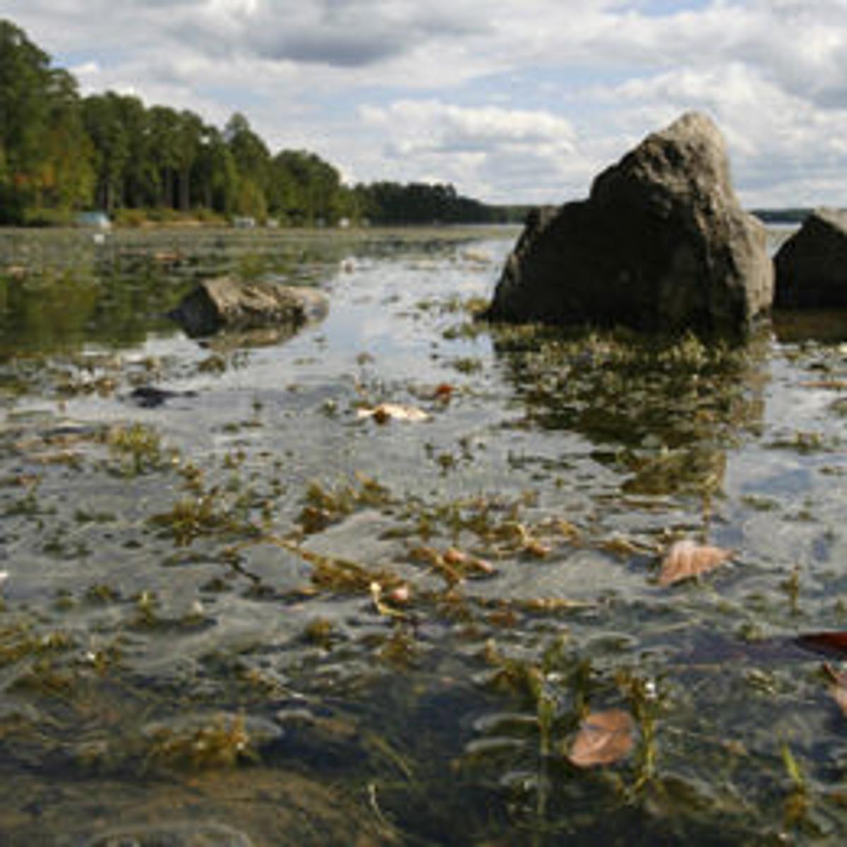 Super Hydrilla problem growing in Chesterfield's Swift Creek Reservoir BO-64