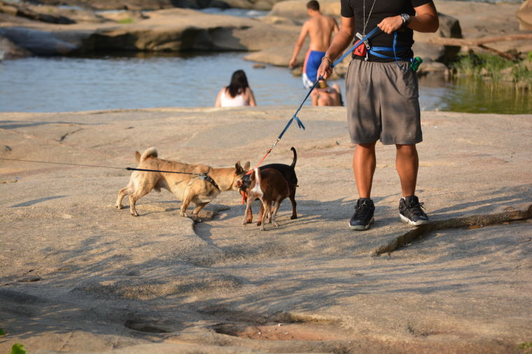 Best Places to Take Dogs at the James River - Belle Isle