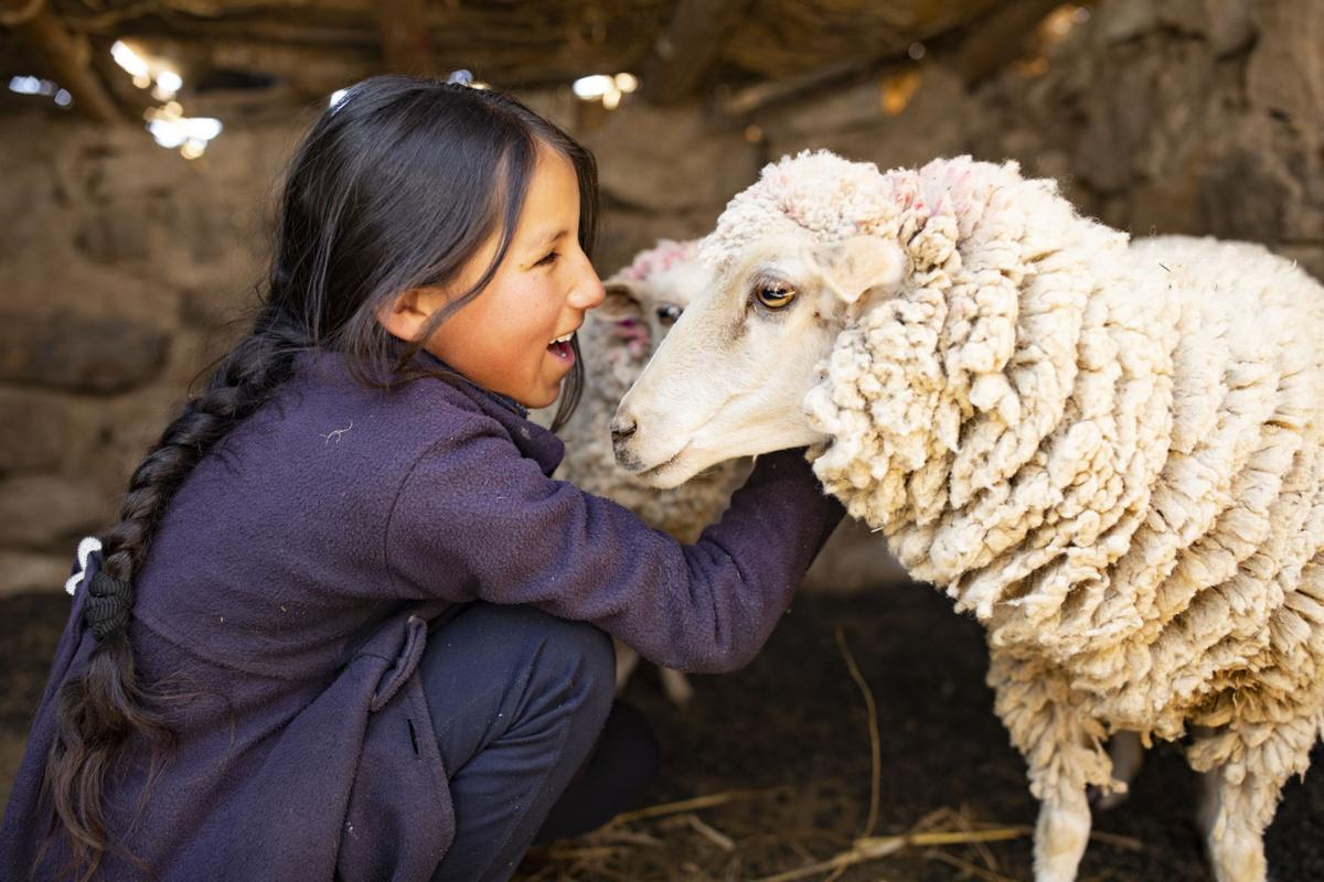 Bolivia sheep.jpg