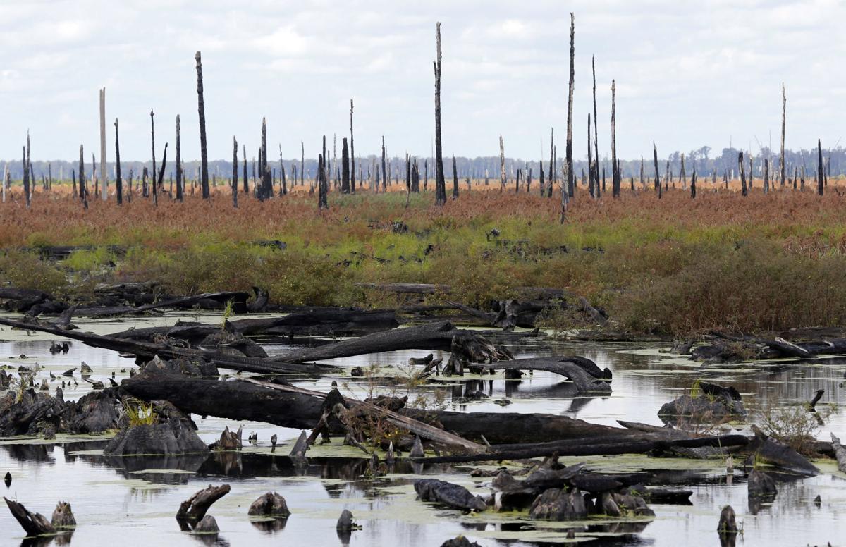 Dry Dismal Swamp