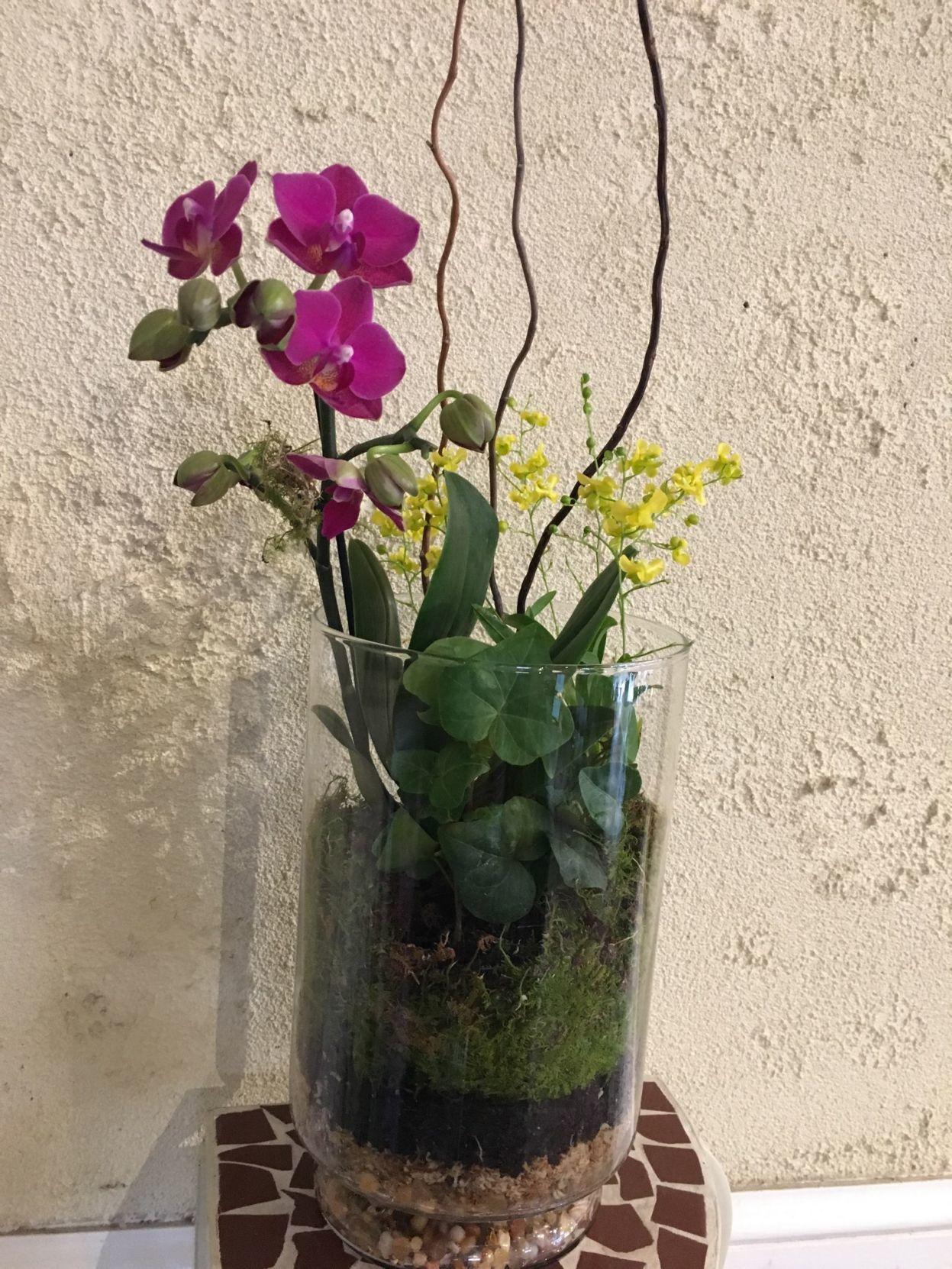 Orchids Wardian Cases And Terrariums Richmond Com