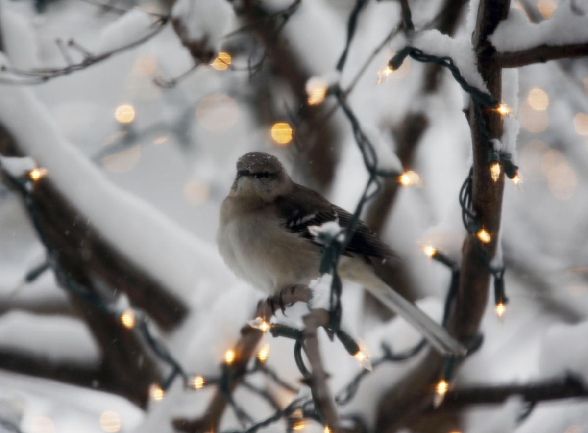 20170108_MET_SNOW_BB01