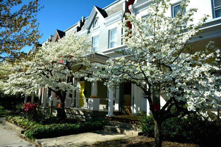 Photos Spring In The Fan District Richmond Com Photos