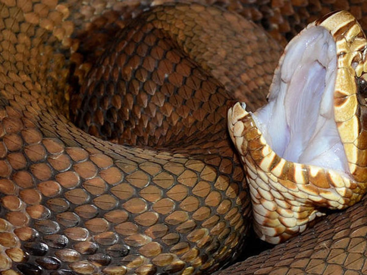 water moccasin drink recipe