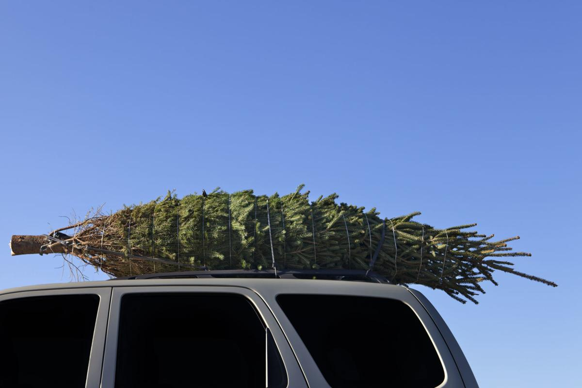 How To Choose A Christmas Tree, Whether Real Or Artificial