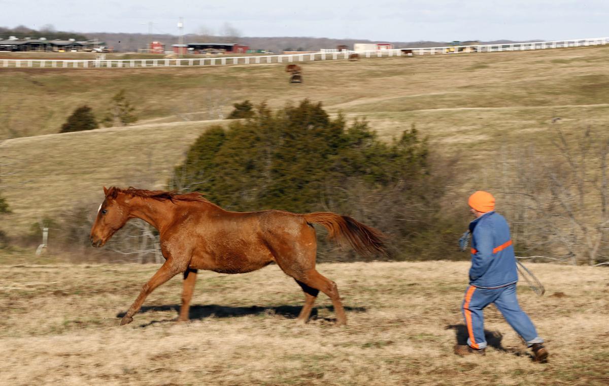 20190224_MET_HORSES_18
