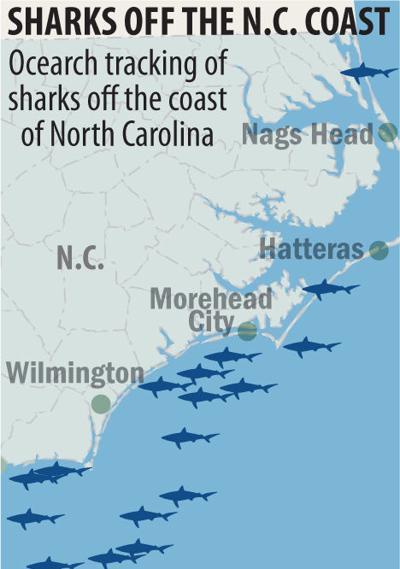 Sharks off the coast of N.C.